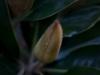 bloom01