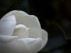bloom04
